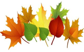 Fall Leaves Clipart